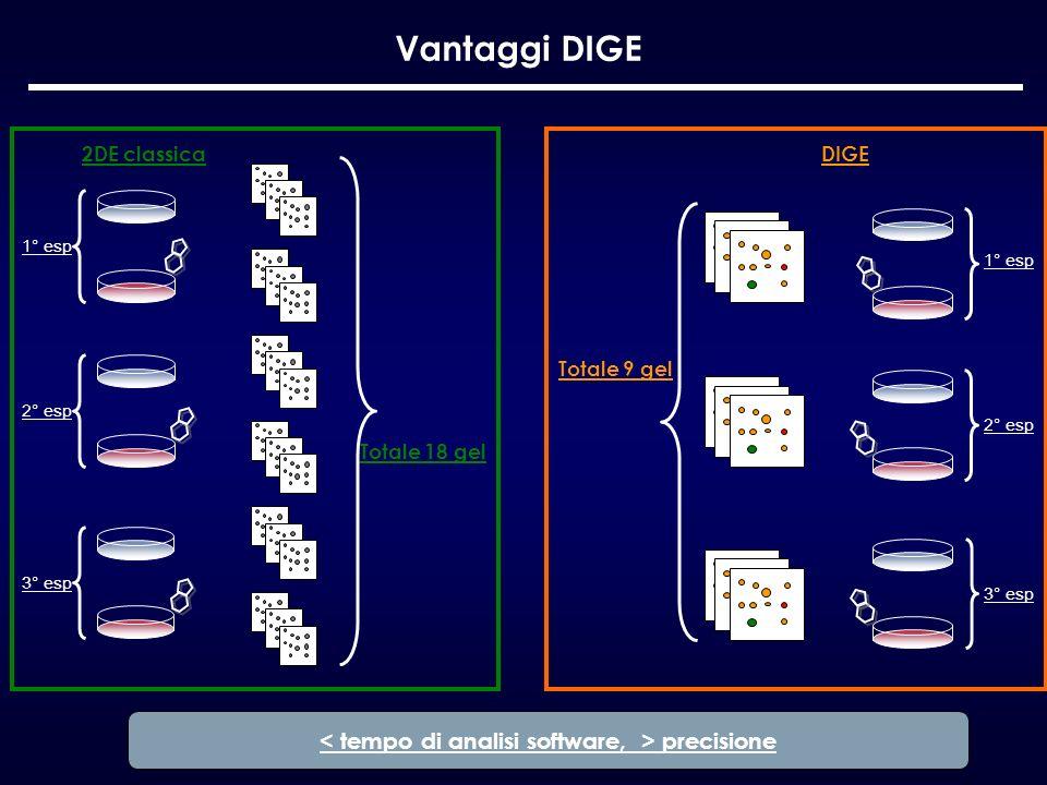 Vantaggi DIGE 2DE classica Totale 18 gel 1° esp 2° esp 3° esp Totale 9 gel 1° esp 2° esp 3° esp DIGE precisione