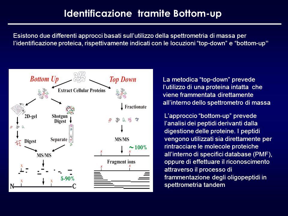 Identificazione tramite Bottom-up Esistono due differenti approcci basati sullutilizzo della spettrometria di massa per lidentificazione proteica, ris