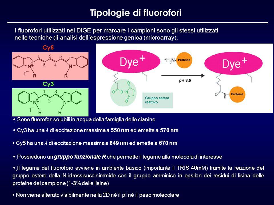 Tipologie di fluorofori I fluorofori utilizzati nel DIGE per marcare i campioni sono gli stessi utilizzati nelle tecniche di analisi dellespressione g