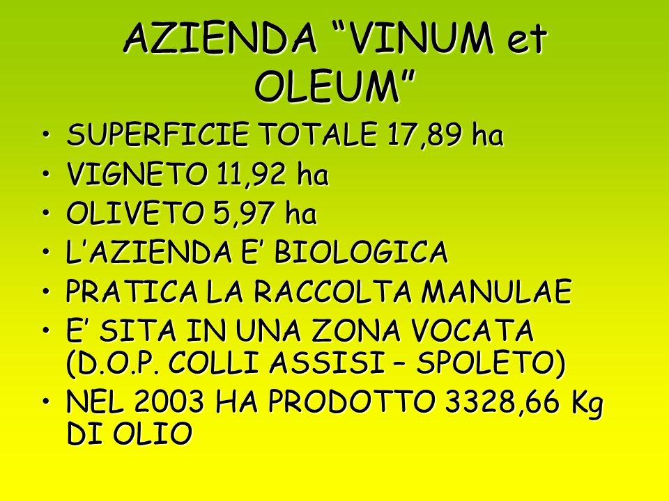 AZIENDA VINUM et OLEUM SUPERFICIE TOTALE 17,89 haSUPERFICIE TOTALE 17,89 ha VIGNETO 11,92 haVIGNETO 11,92 ha OLIVETO 5,97 haOLIVETO 5,97 ha LAZIENDA E BIOLOGICALAZIENDA E BIOLOGICA PRATICA LA RACCOLTA MANULAEPRATICA LA RACCOLTA MANULAE E SITA IN UNA ZONA VOCATA (D.O.P.