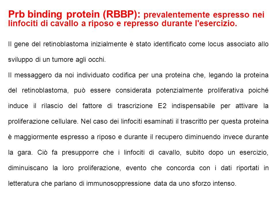 Prb binding protein (RBBP): prevalentemente espresso nei linfociti di cavallo a riposo e represso durante l esercizio.
