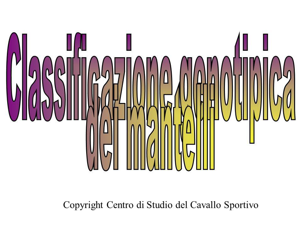 Copyright Centro di Studio del Cavallo Sportivo