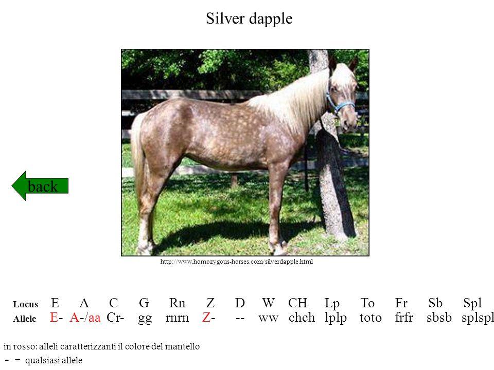 Silver dapple back Locus E A C G Rn Z D W CH Lp To Fr Sb Spl Allele E- A-/aa Cr- gg rnrn Z- -- ww chch lplp toto frfr sbsb splspl in rosso: alleli car