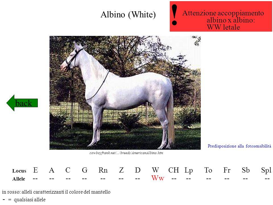Albino (White) back Locus E A C G Rn Z D W CH Lp To Fr Sb Spl Allele -- -- -- -- -- -- -- Ww -- -- -- -- -- -- in rosso: alleli caratterizzanti il col