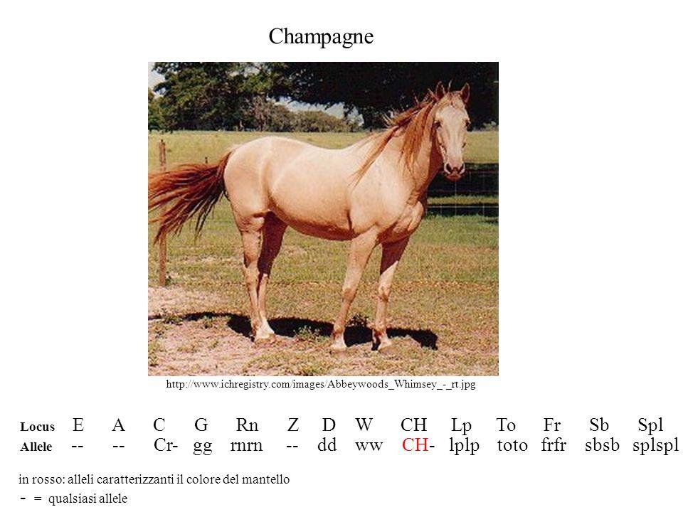 Champagne Locus E A C G Rn Z D W CH Lp To Fr Sb Spl Allele -- -- Cr- gg rnrn -- dd ww CH- lplp toto frfr sbsb splspl in rosso: alleli caratterizzanti