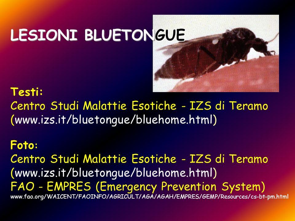 LESIONI BLUETONGUE Testi: Centro Studi Malattie Esotiche - IZS di Teramo (www.izs.it/bluetongue/bluehome.html) Foto : Centro Studi Malattie Esotiche -