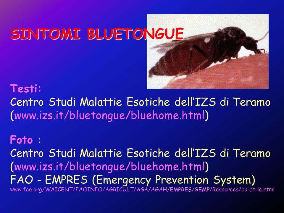 SINTOMI BLUETONGUE Testi: Centro Studi Malattie Esotiche dellIZS di Teramo (www.izs.it/bluetongue/bluehome.html) Foto : Centro Studi Malattie Esotiche