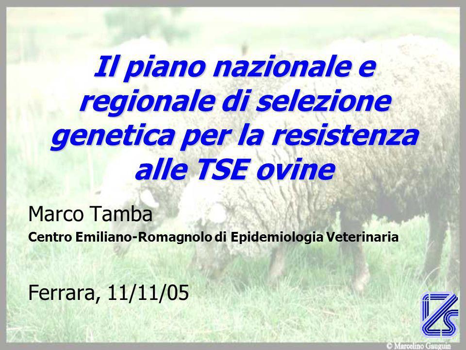 Il piano nazionale e regionale di selezione genetica per la resistenza alle TSE ovine Marco Tamba Centro Emiliano-Romagnolo di Epidemiologia Veterinaria Ferrara, 11/11/05