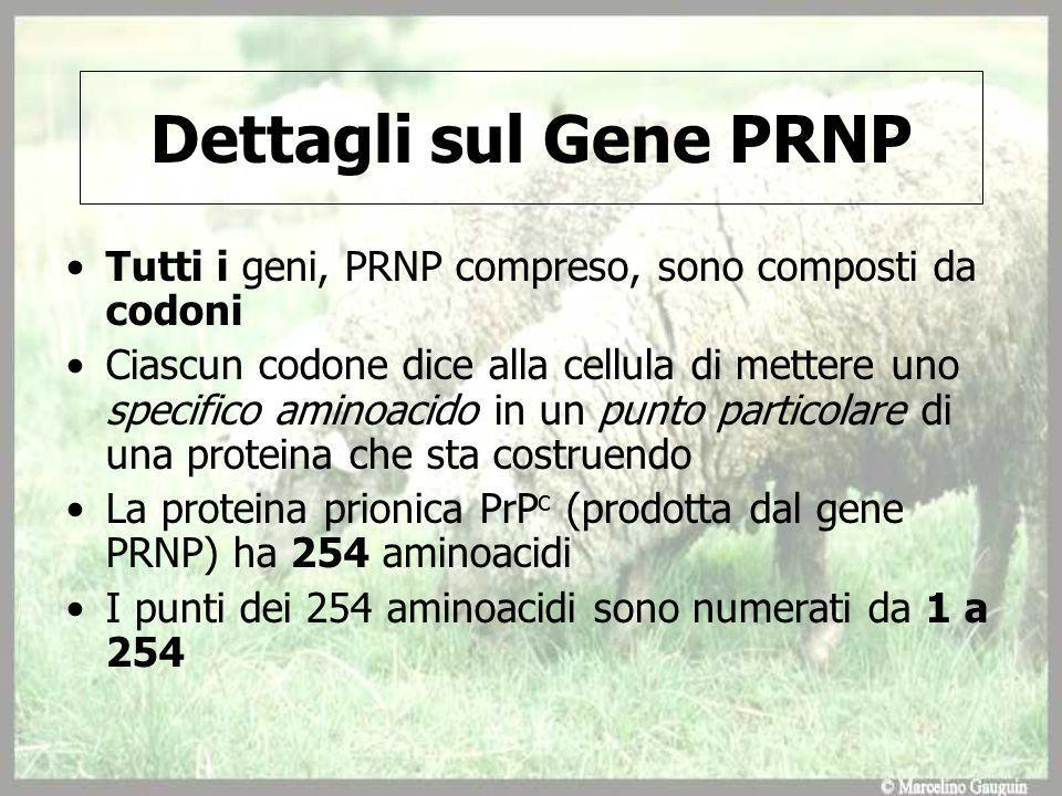 Dettagli sul Gene PRNP Tutti i geni, PRNP compreso, sono composti da codoni Ciascun codone dice alla cellula di mettere uno specifico aminoacido in un punto particolare di una proteina che sta costruendo La proteina prionica PrP c (prodotta dal gene PRNP) ha 254 aminoacidi I punti dei 254 aminoacidi sono numerati da 1 a 254