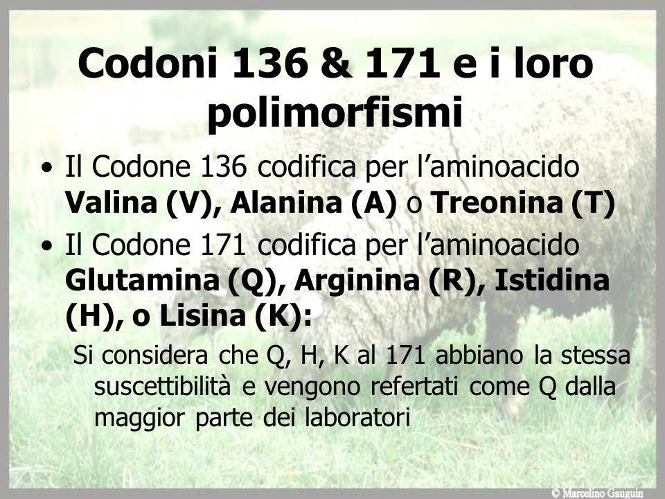 Codoni 136 & 171 e i loro polimorfismi Il Codone 136 codifica per laminoacido Valina (V), Alanina (A) o Treonina (T) Il Codone 171 codifica per laminoacido Glutamina (Q), Arginina (R), Istidina (H), o Lisina (K): Si considera che Q, H, K al 171 abbiano la stessa suscettibilità e vengono refertati come Q dalla maggior parte dei laboratori