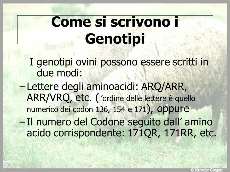 Come si scrivono i Genotipi I genotipi ovini possono essere scritti in due modi: –Lettere degli aminoacidi: ARQ/ARR, ARR/VRQ, etc.