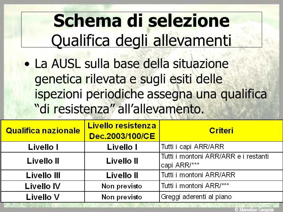 Schema di selezione Qualifica degli allevamenti La AUSL sulla base della situazione genetica rilevata e sugli esiti delle ispezioni periodiche assegna una qualifica di resistenza allallevamento.