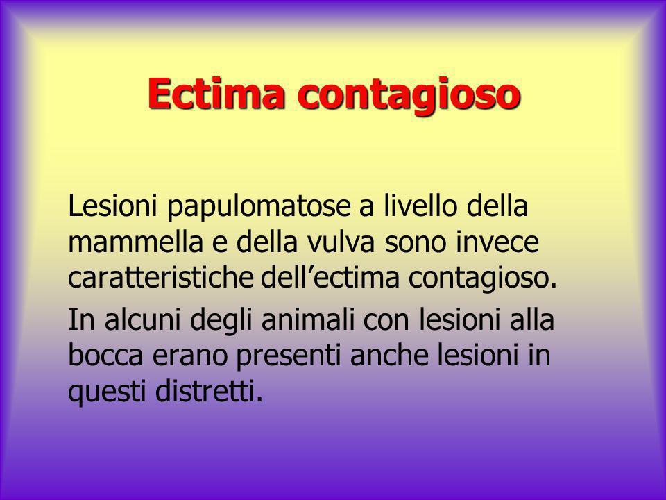 Ectima contagioso Lesioni papulomatose a livello della mammella e della vulva sono invece caratteristiche dellectima contagioso. In alcuni degli anima