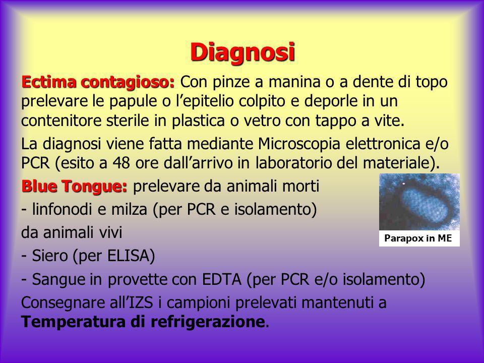 Diagnosi Ectima contagioso: Ectima contagioso: Con pinze a manina o a dente di topo prelevare le papule o lepitelio colpito e deporle in un contenitor