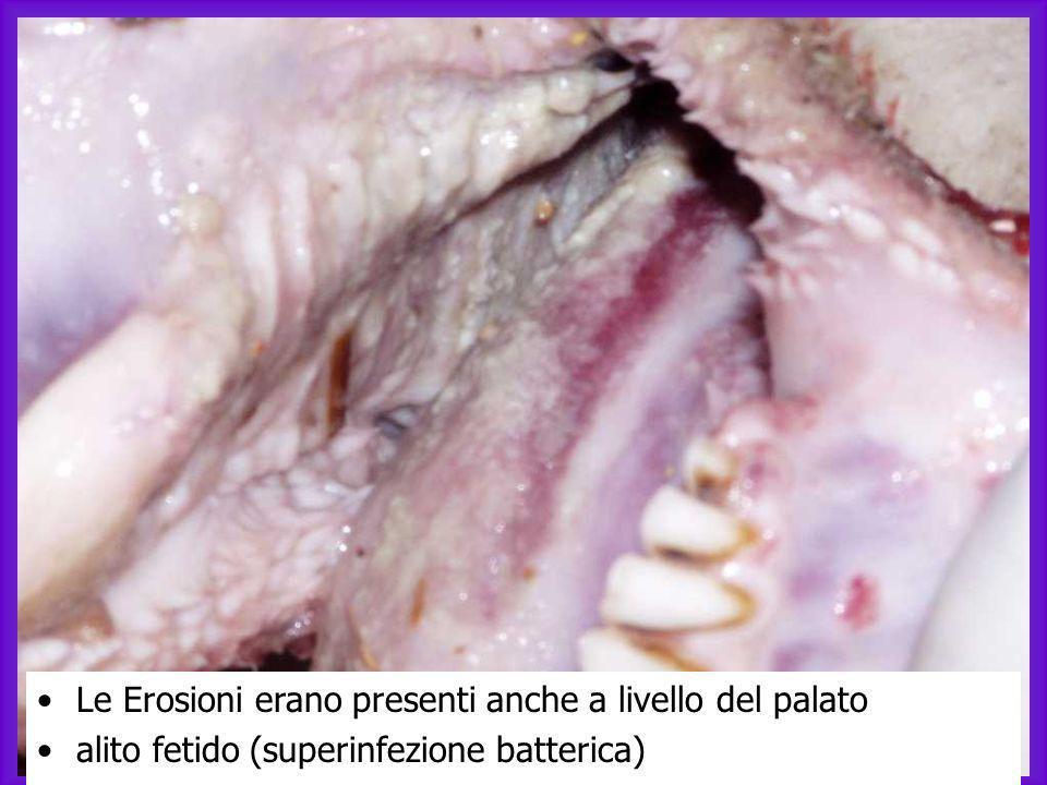 Ectima contagioso Nellectima contagioso manca la componente emorragica tipica della BT.