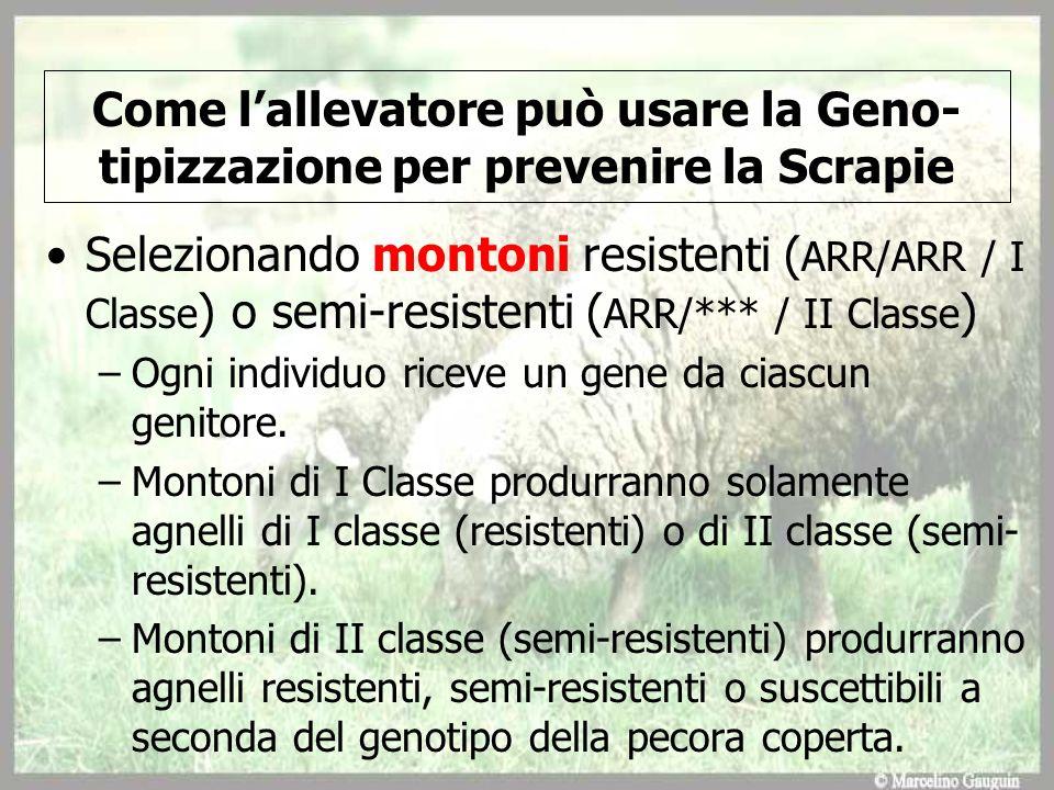 Come lallevatore può usare la Geno- tipizzazione per prevenire la Scrapie Selezionando montoni resistenti ( ARR/ARR / I Classe ) o semi-resistenti ( A
