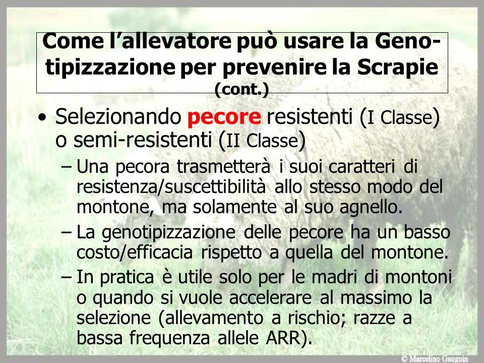 Come lallevatore può usare la Geno- tipizzazione per prevenire la Scrapie (cont.) Selezionando pecore resistenti ( I Classe ) o semi-resistenti ( II C