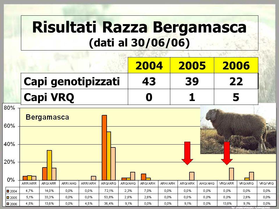 Risultati Razza Bergamasca (dati al 30/06/06) 200420052006 Capi genotipizzati433922 Capi VRQ015