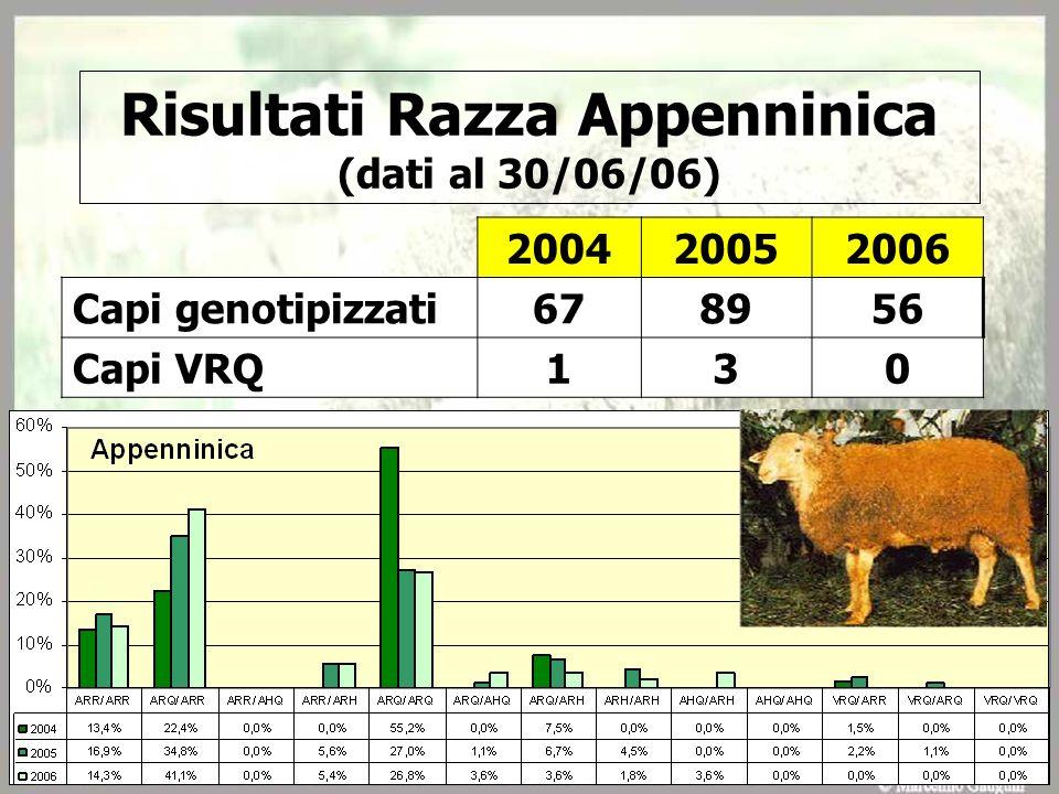 Risultati Razza Appenninica (dati al 30/06/06) 200420052006 Capi genotipizzati678956 Capi VRQ130