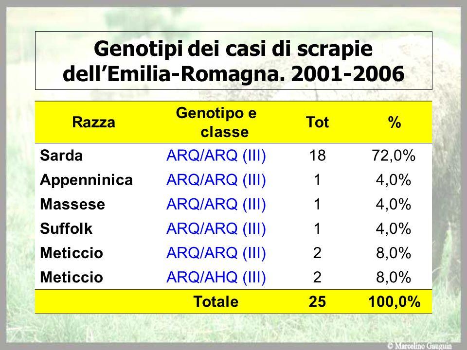 Razza Genotipo e classe Tot% SardaARQ/ARQ (III)1872,0% AppenninicaARQ/ARQ (III)14,0% MasseseARQ/ARQ (III)14,0% SuffolkARQ/ARQ (III)14,0% MeticcioARQ/A
