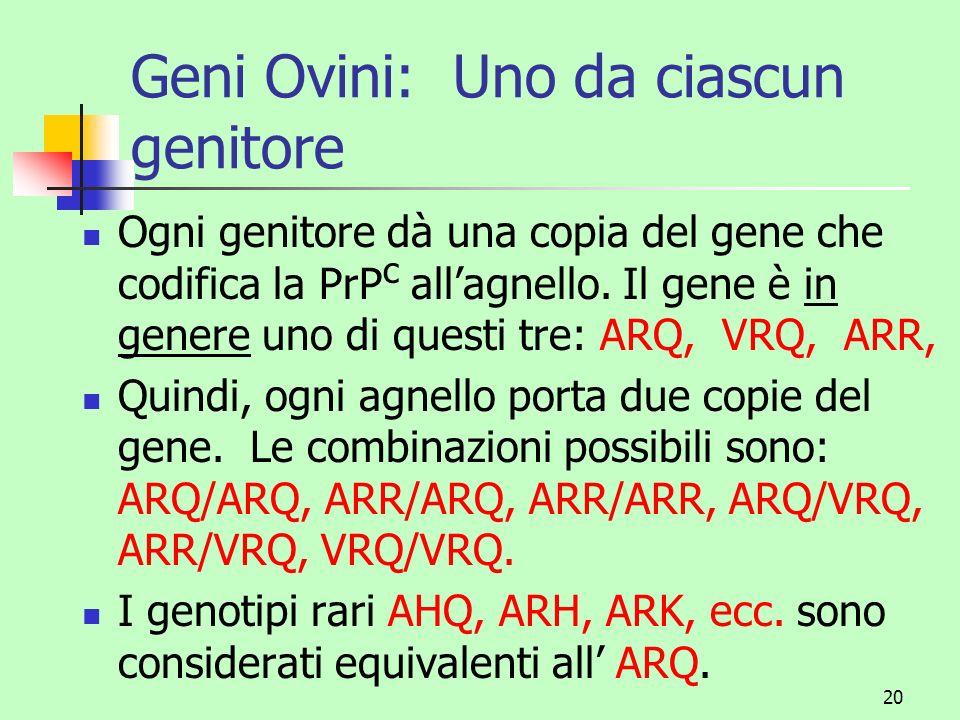 21 Combinazioni dei genotipi e suscettibilità alla scrapie ARR/ARR sono resistenti (Classe I) ARR/ARQ sono semi-resistenti (Classe II) ARQ/ARQ sono suscettibili (Classe III) ARQ/VRQ sono molto suscettibili (divieto di impiego come riproduttori) VRQ/VRQ sono molto suscettibili (divieto di impiego come riproduttori) ARR/VRQ sono poco suscettibili (divieto di impiego come riproduttori)