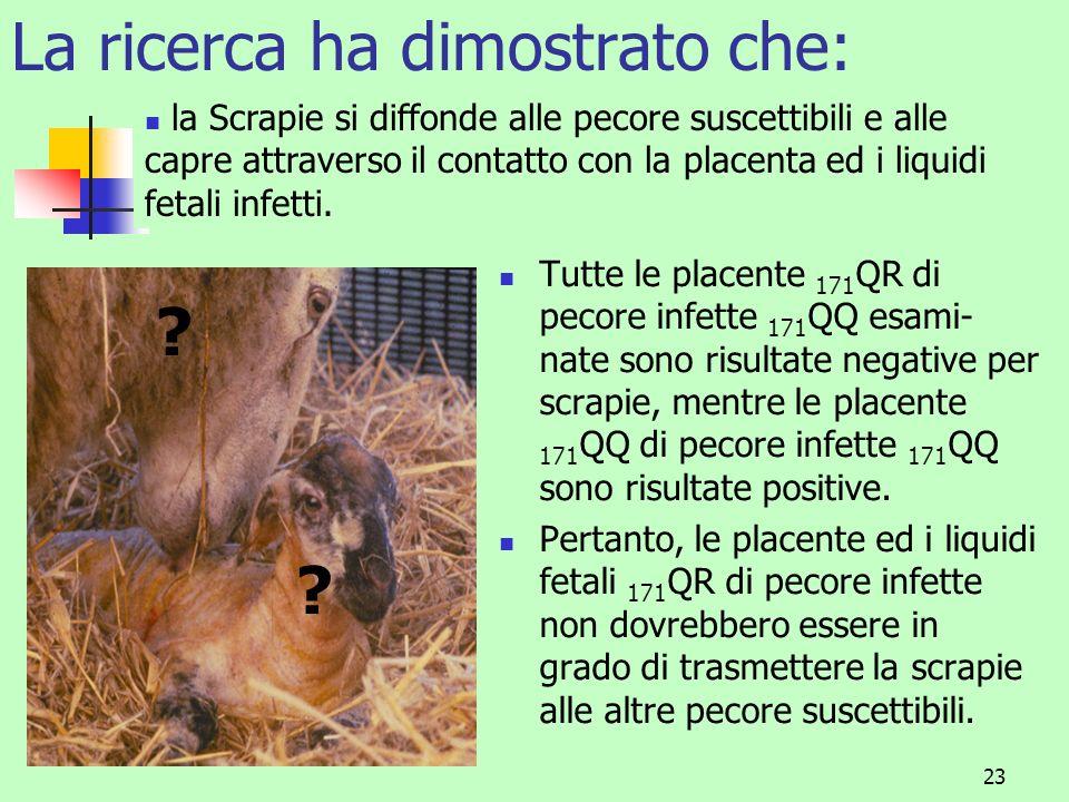 24 Limportanza del genotipo della placenta nella trasmissione della scrapie Gli agnelli hanno una combinazione del DNA della pecora e del montone; una pecora 171 QQ (III) accoppiata ad un montone 171 RR (I) produrrà un agnello 171 QR (II) con fluidi e placenta 171 QR (II).