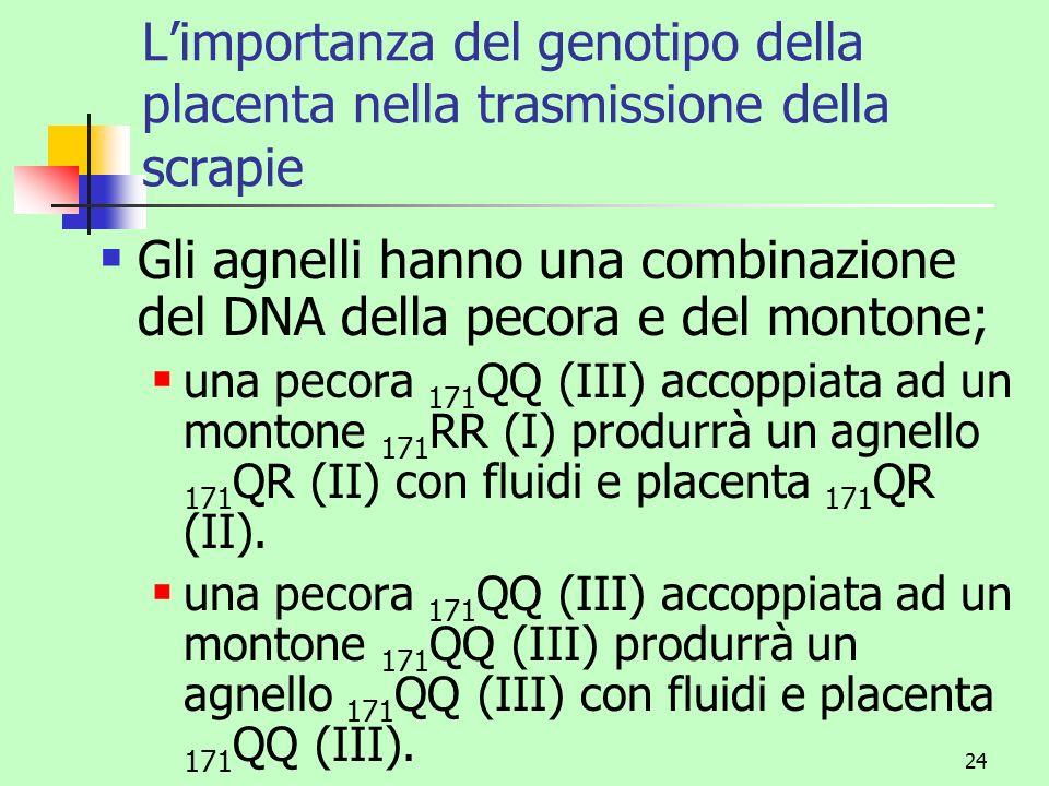 24 Limportanza del genotipo della placenta nella trasmissione della scrapie Gli agnelli hanno una combinazione del DNA della pecora e del montone; una