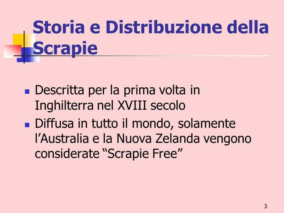3 Storia e Distribuzione della Scrapie Descritta per la prima volta in Inghilterra nel XVIII secolo Diffusa in tutto il mondo, solamente lAustralia e
