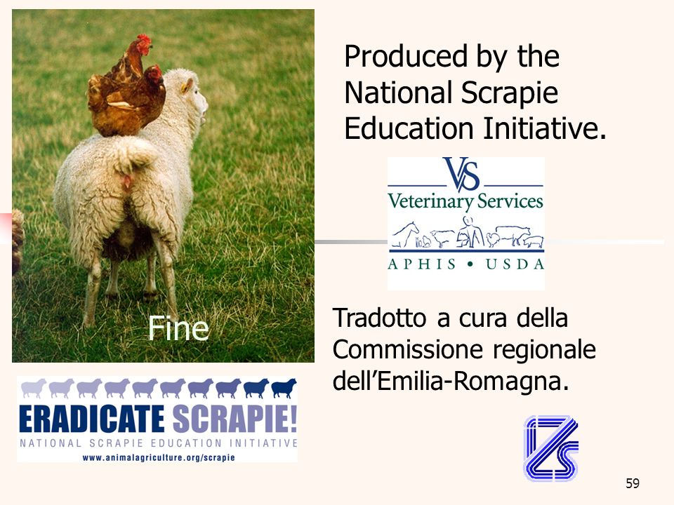59 Fine Produced by the National Scrapie Education Initiative. Tradotto a cura della Commissione regionale dellEmilia-Romagna.