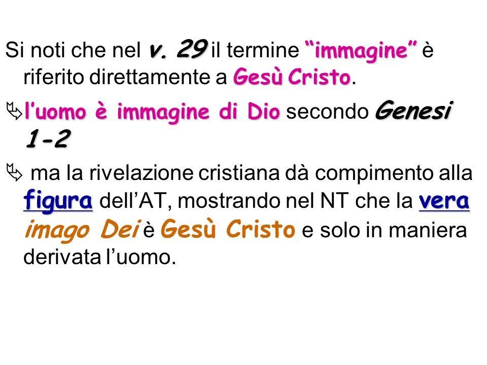 v.29 immagine GesùCristo Si noti che nel v. 29 il termine immagine è riferito direttamente a Gesù Cristo. luomo è immagine di Dio Genesi 1-2 luomo è i