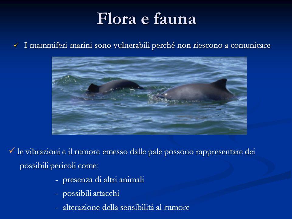 Flora e fauna I mammiferi marini sono vulnerabili perché non riescono a comunicare I mammiferi marini sono vulnerabili perché non riescono a comunicar