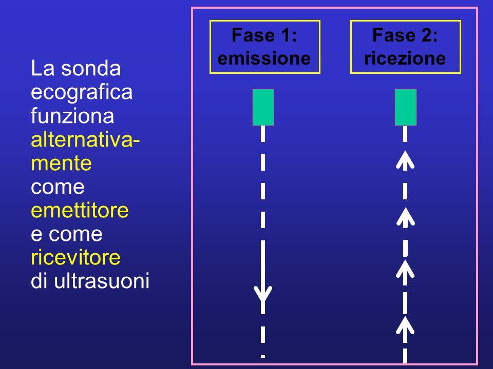 La sonda ecografica funziona alternativa- mente come emettitore e come ricevitore di ultrasuoni Fase 1: emissione Fase 2: ricezione