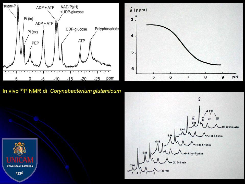 Con la spettroscopia RM del protone (1H-MRS): n-acetilaspartato (NAA) colina (Cho) creatina + fosfocreatina (Cr) glutammato e glutammina (Glx) mio-ino