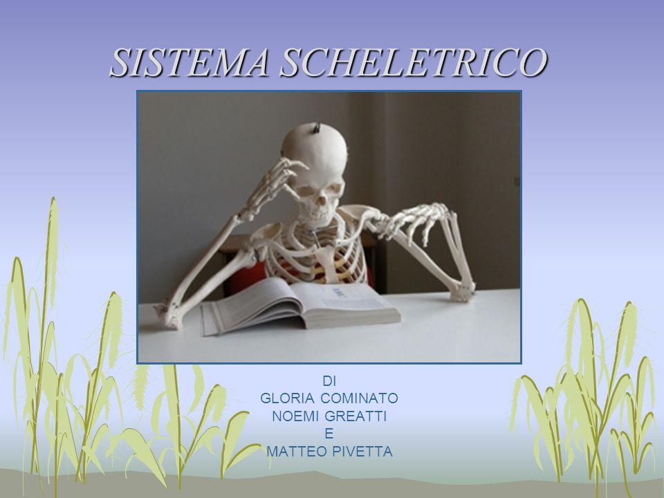 LO SCHELETRO Lo scheletro umano è formato da 206 ossa.