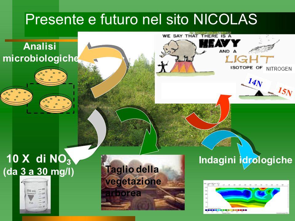 Presente e futuro nel sito NICOLAS 10 X di NO 3 (da 3 a 30 mg/l) Analisi microbiologiche Taglio della vegetazione arborea NITROGEN 14N 15N Indagini id