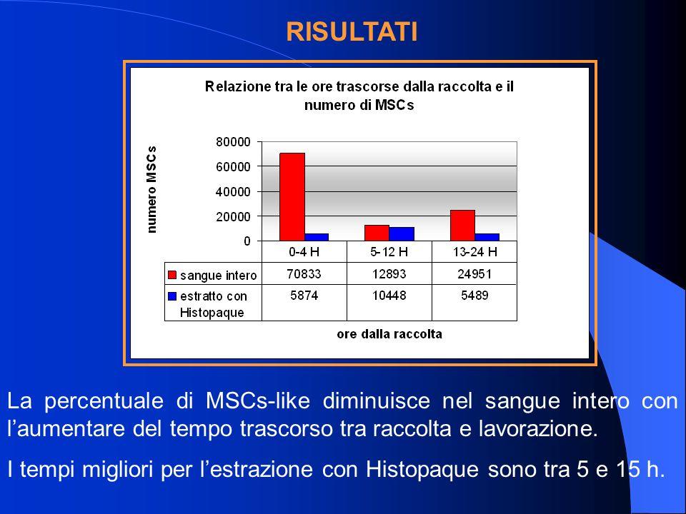 La percentuale di MSCs-like diminuisce nel sangue intero con laumentare del tempo trascorso tra raccolta e lavorazione.
