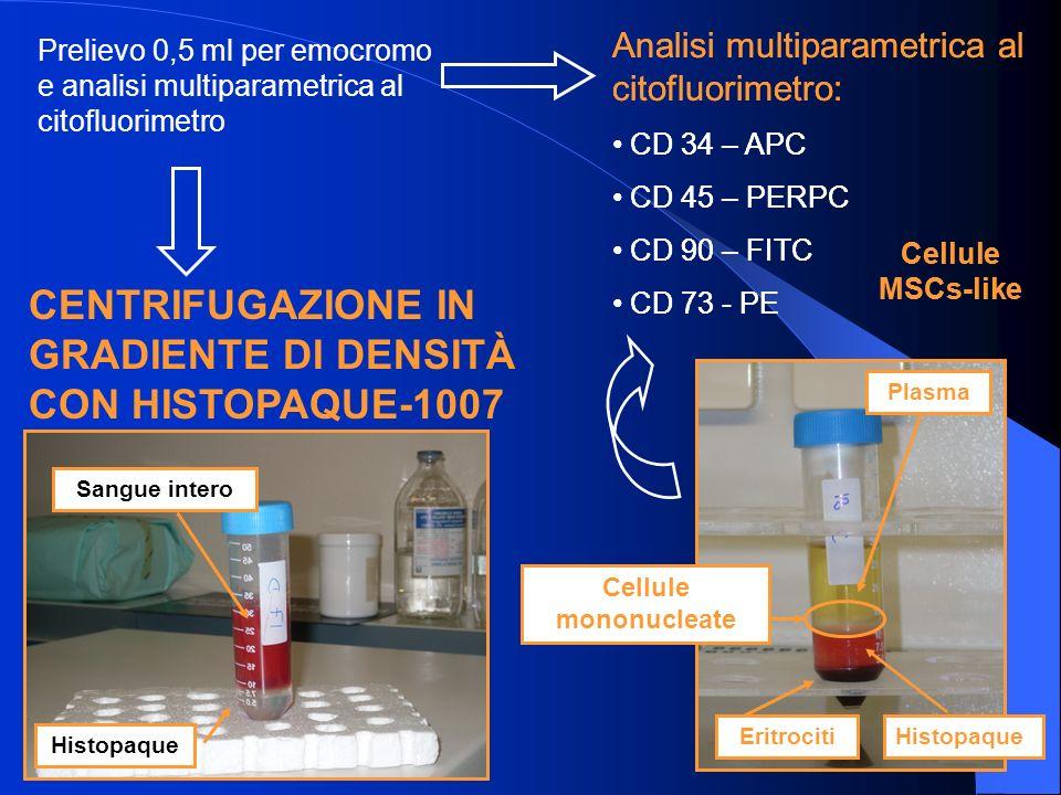Prelievo 0,5 ml per emocromo e analisi multiparametrica al citofluorimetro Analisi multiparametrica al citofluorimetro: CD 34 – APC CD 45 – PERPC CD 90 – FITC CD 73 - PE Cellule MSCs-like CENTRIFUGAZIONE IN GRADIENTE DI DENSITÀ CON HISTOPAQUE-1007 Sangue intero Histopaque Analisi multiparametrica al citofluorimetro: CD 34 – APC CD 45 – PERPC CD 90 – FITC CD 73 - PE Cellule MSCs-like Plasma EritrocitiHistopaque Cellule mononucleate