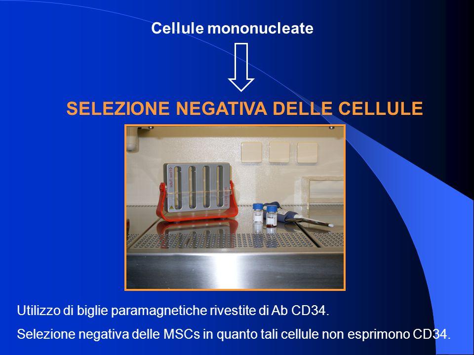 SELEZIONE NEGATIVA DELLE CELLULE Utilizzo di biglie paramagnetiche rivestite di Ab CD34.