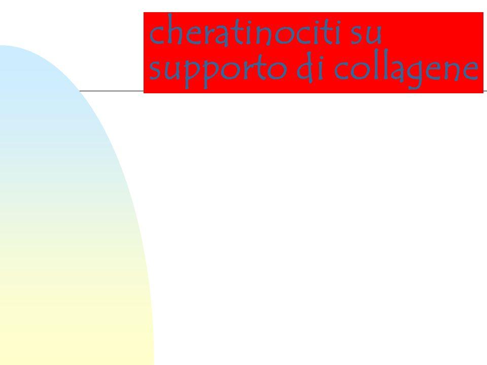 Risulta quindi evidente la necessità di impiegare un supporto idoneo da utilizzare come carrier per le cellule in coltura.
