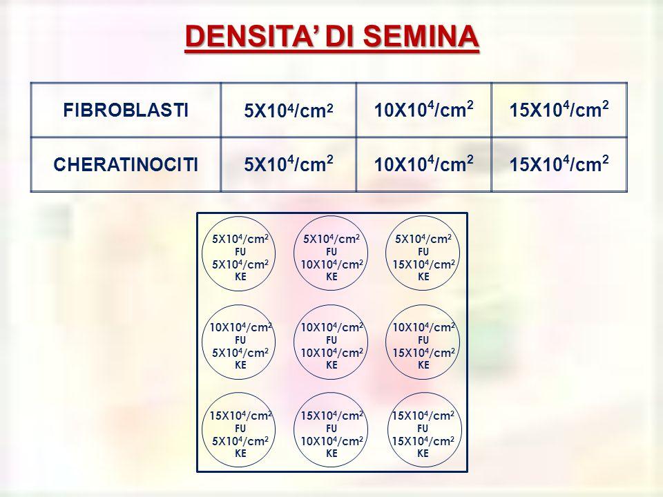 5X10 4 /cm 2 FU 5X10 4 /cm 2 KE 5X10 4 /cm 2 FU 10X10 4 /cm 2 KE 5X10 4 /cm 2 FU 15X10 4 /cm 2 KE 10X10 4 /cm 2 FU 5X10 4 /cm 2 KE 10X10 4 /cm 2 FU 10