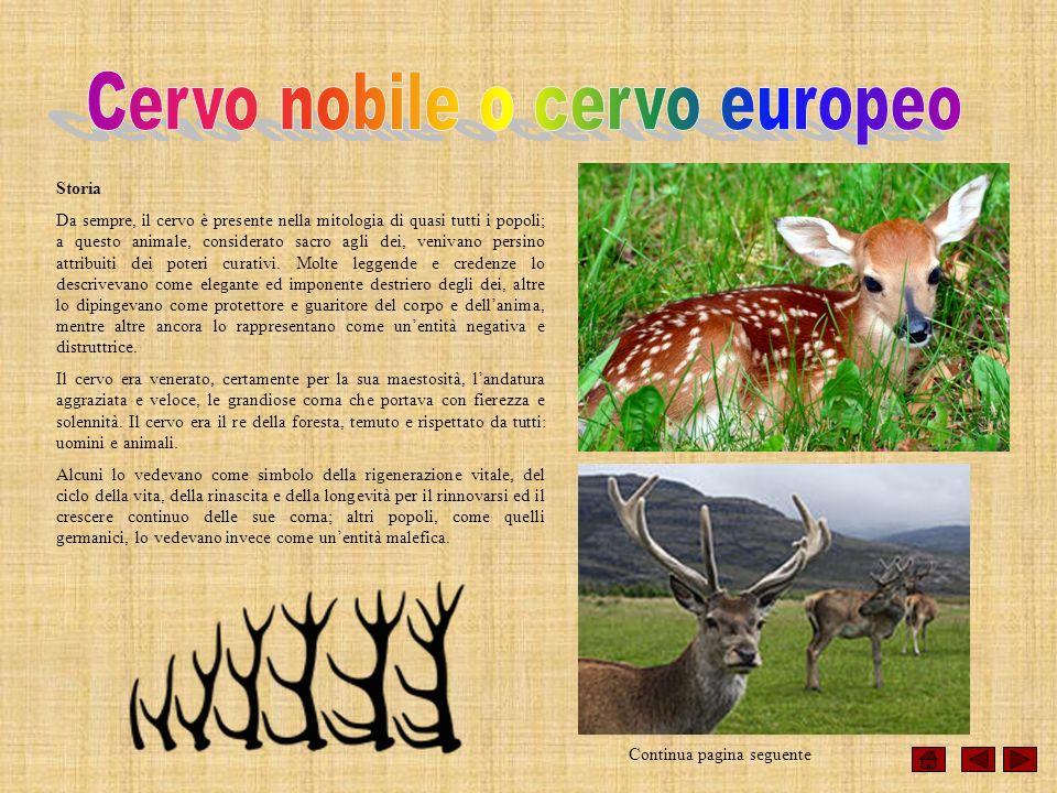 Storia Da sempre, il cervo è presente nella mitologia di quasi tutti i popoli; a questo animale, considerato sacro agli dei, venivano persino attribui
