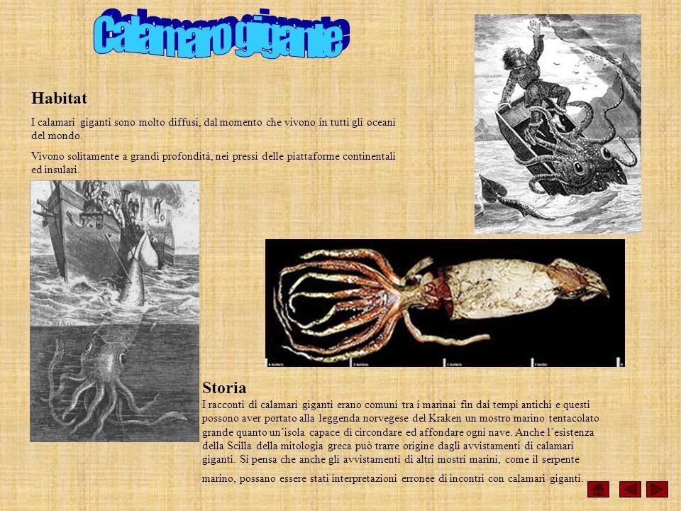 Habitat I calamari giganti sono molto diffusi, dal momento che vivono in tutti gli oceani del mondo. Vivono solitamente a grandi profondità, nei press