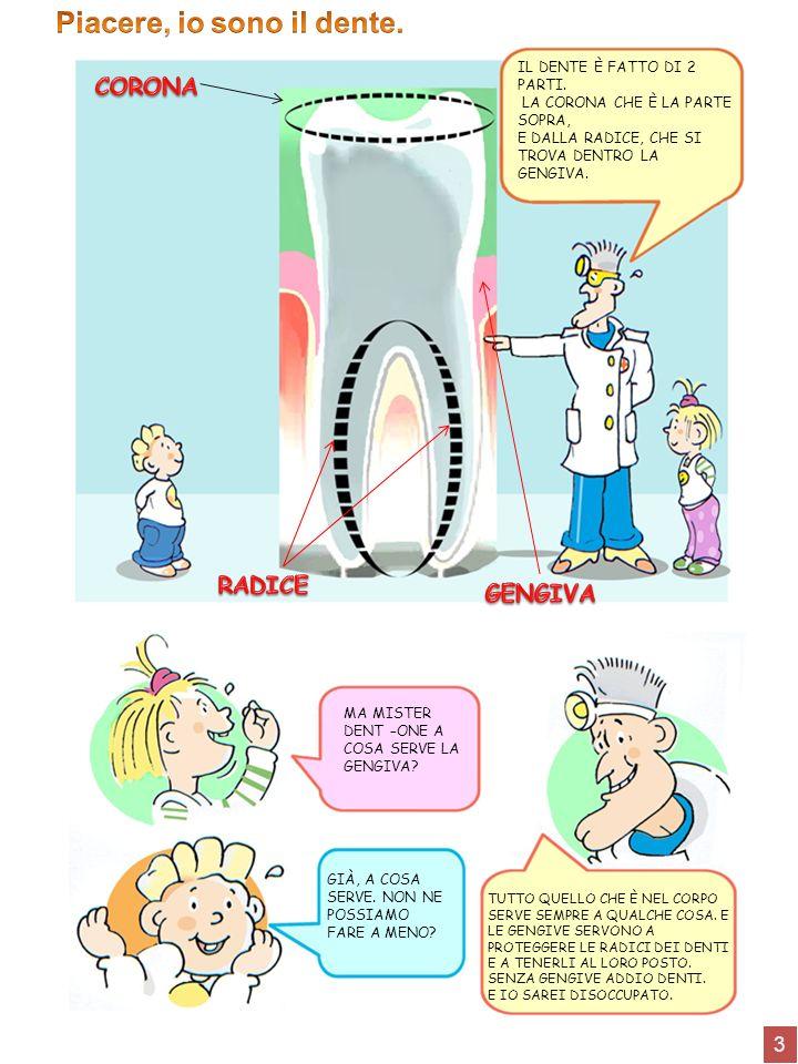14 DENTIFRICIOSPAZZOLINO FILO INTERDENTALE Lo spazzolino per i bambini deve avere la testa piccola e le setole morbide per non rovinare le gengive.