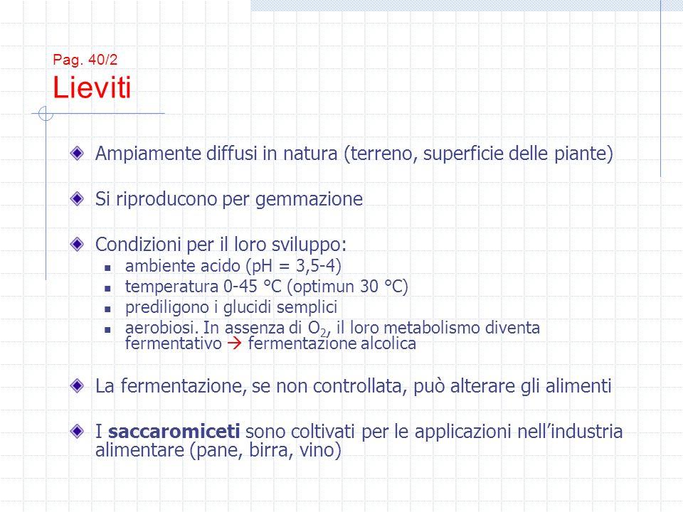 Pag. 40/2 Lieviti Ampiamente diffusi in natura (terreno, superficie delle piante) Si riproducono per gemmazione Condizioni per il loro sviluppo: ambie