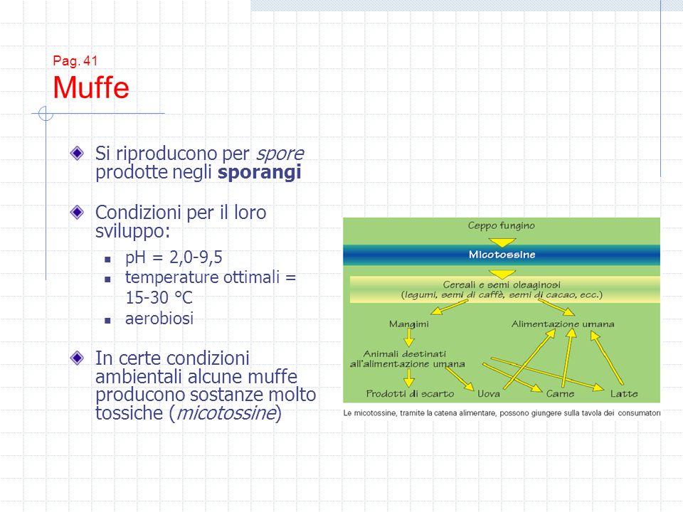 Pag. 41 Muffe Si riproducono per spore prodotte negli sporangi Condizioni per il loro sviluppo: pH = 2,0-9,5 temperature ottimali = 15-30 °C aerobiosi