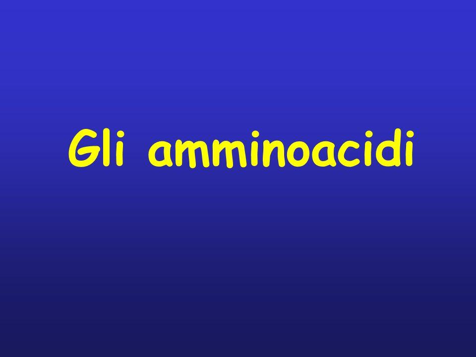 Gli amminoacidi