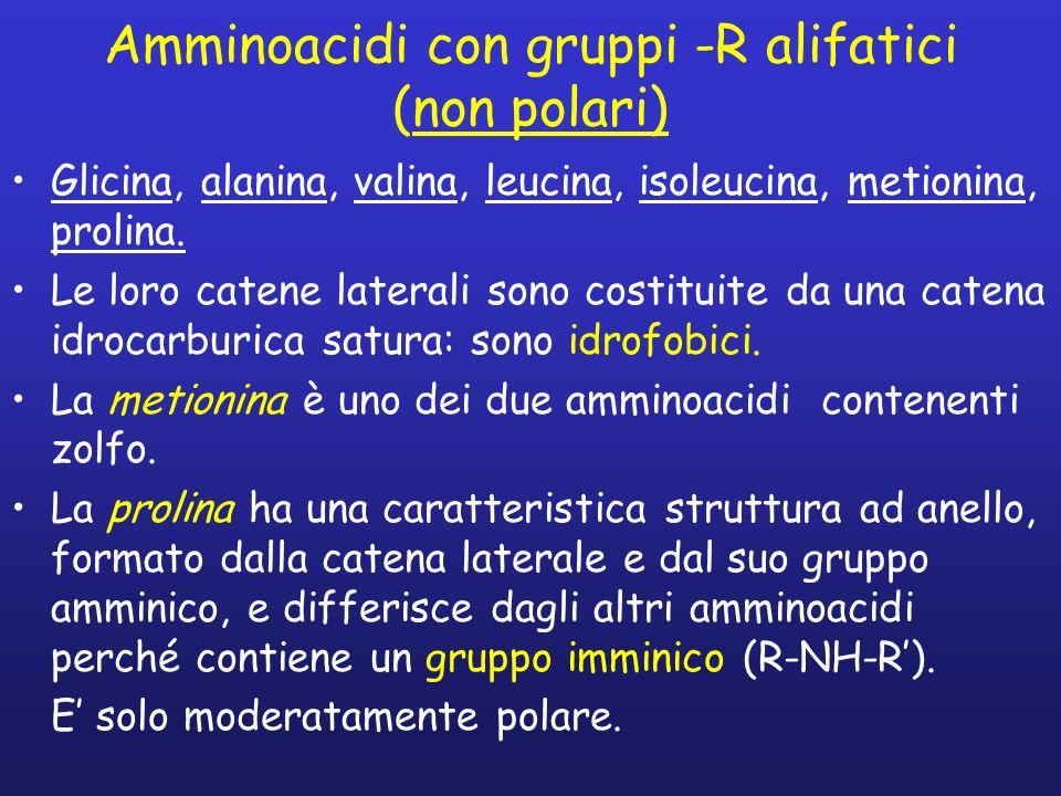 Amminoacidi con gruppi -R alifatici (non polari) Glicina, alanina, valina, leucina, isoleucina, metionina, prolina. Le loro catene laterali sono costi