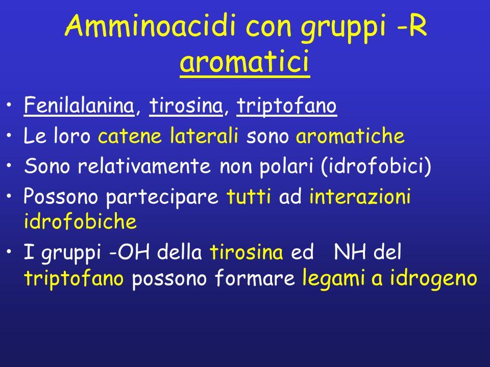 Amminoacidi con gruppi -R aromatici Fenilalanina, tirosina, triptofano Le loro catene laterali sono aromatiche Sono relativamente non polari (idrofobi