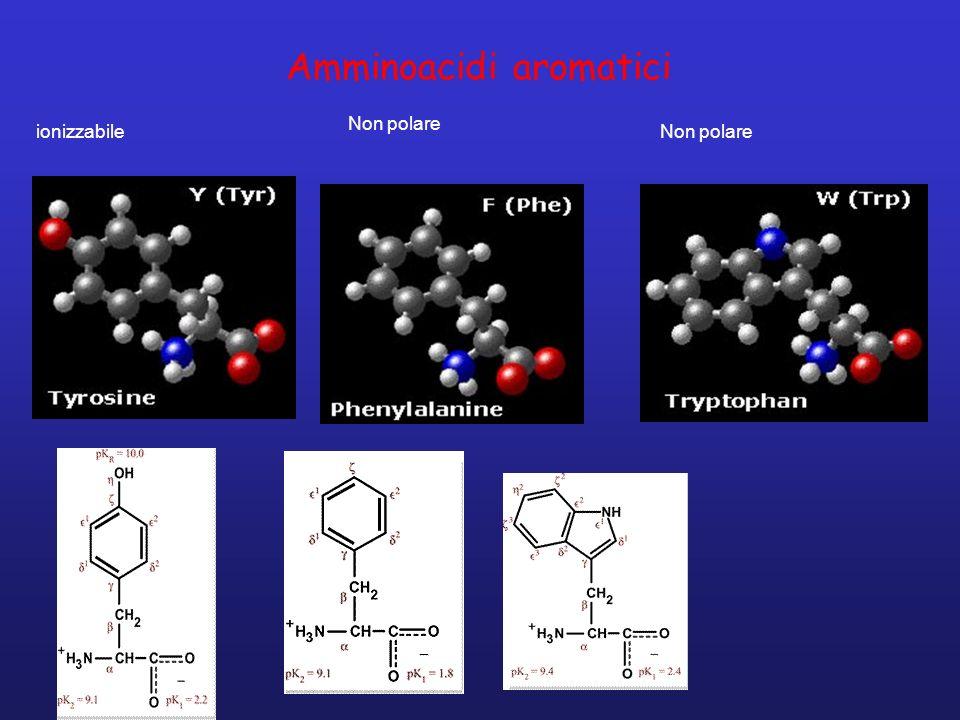 Amminoacidi aromatici ionizzabile Non polare