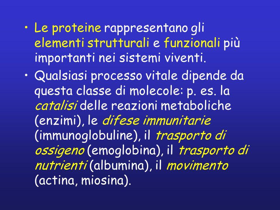 Le proteine rappresentano gli elementi strutturali e funzionali più importanti nei sistemi viventi. Qualsiasi processo vitale dipende da questa classe